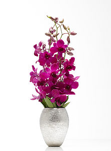 Orchid Vase - shop by personality