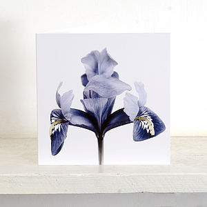 Five 'Harmony' Iris Greetings Card - shop by category