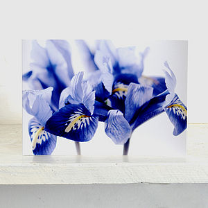 Five 'Harmony' Collection Of Irises Greetings Card