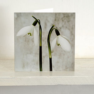 Five Cards Of 'Two Snowdrops' Greetings Card