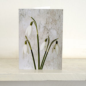 Four Snowdrops Greetings Card