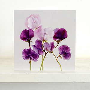 Set Of Five Sweet Pea Blank Greeting Cards