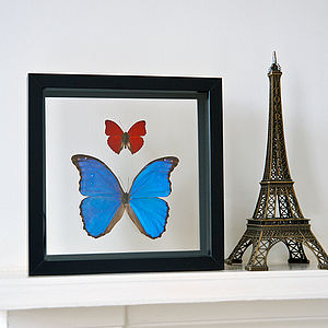 Morpho And Sangaris Framed Butterflies - decorative accessories