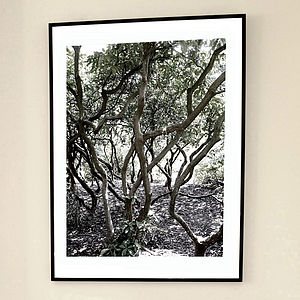 'Rhododendron Maze' Limited Edition Print - posters & prints
