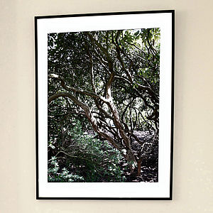 'Rhododendron Maze Two' Limited Edition Print - nature inspired art