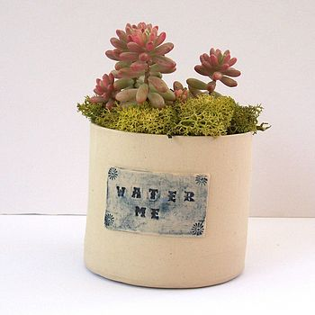 Stoneware Pot With Water Me Label