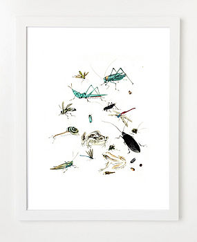 Illustrated Bugs Art Or Canvas Print