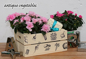 Vintage Style Vegetables Gift Crate