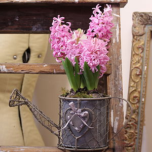 Vintage Style Watering Can Plant Holder - pots & windowboxes