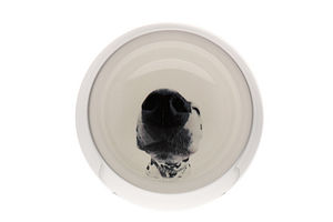 Eco Dog Bowl - food, feeding & treats