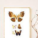 Vintage Style Butterfly Print Or Canvas