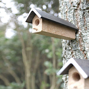 Bee Homes, Set Of Three - birds & wildlife