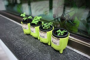 Grow A Herb Capsule Pots - on trend: indoor gardens