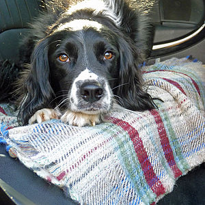 Checked Wool Pet Blanket - dogs