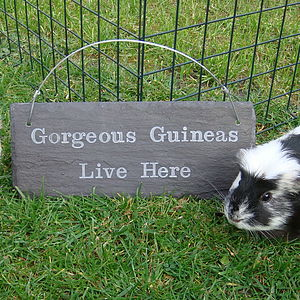 Engraved Slate Guinea Pig Pet Sign - art & decorations