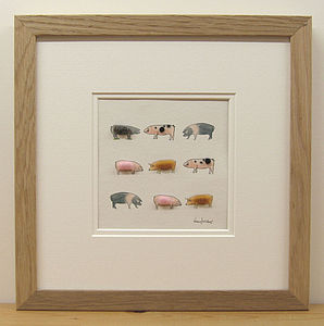 Rare Breed Pig Picture - art & pictures