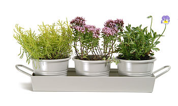 Herb Pots on Tray Clay