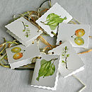 Syston White Plum Gift Tags