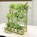 Three Tier Herb And Plant Theatre In Natural Hardwood
