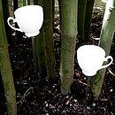 Tea-cups in the garden