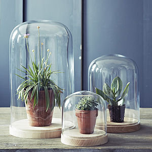Bevin Beech Based Glass Dome - new home gifts
