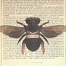 Antique Paper Upcycled 'Bumble Bee' Print, Medium