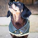 Green Dachshund Coat Leaf Trim