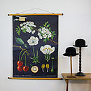 Vintage School Chart Cherry Tree