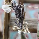 Bunch Of Dried Lavender
