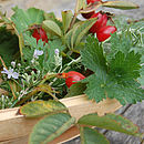 Rosehips and geranium