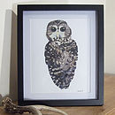 Northern Spotted Owl Illustration Print