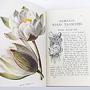 Antique Wild Flowers Books By F. Edward Hulme