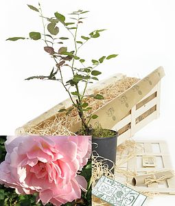 Personalised Box Of Roses Gift - flowers, plants & trees