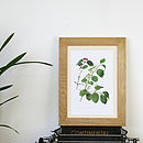 'Honeysuckle' Framed Vintage Print