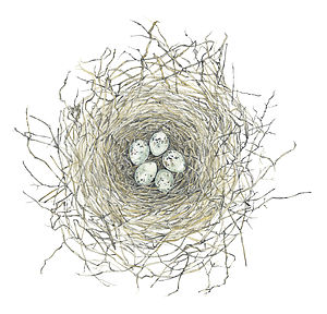 Nest Limited Edition Fine Art Print