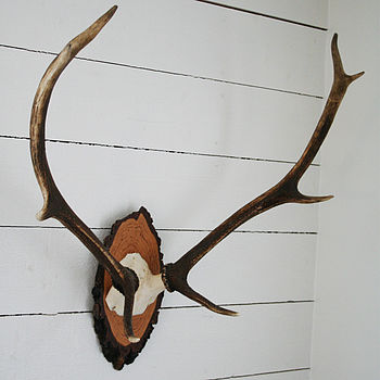 Exclusive Antlers