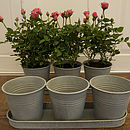 Tray Of Three Zinc Flower Pots