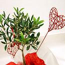 Love Olive Tree Gift