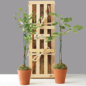 Mini Mediterranean Plants Gift Crate - for fathers