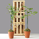 Mini Mediterranean Plants Gift Crate