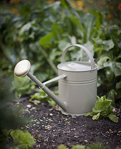 Watering Can Gooseberry