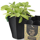 Set Of Three Eco Plant Pots