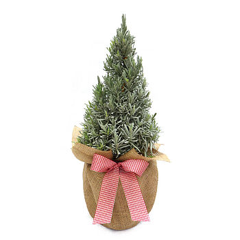 Aromatic Gift Scented Pyramid Lavender