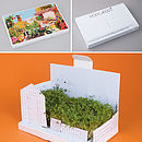 Allotment PostCarden Pop Up Growing Card