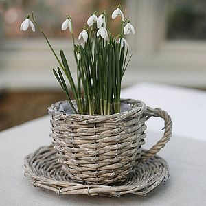 Willow Teacup Planter - flowers, plants & trees