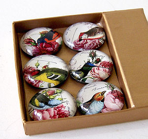 Set Of Six Exotic Bird Magnets - kitchen accessories