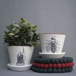 Marie Clay Pots - garden & outdoors