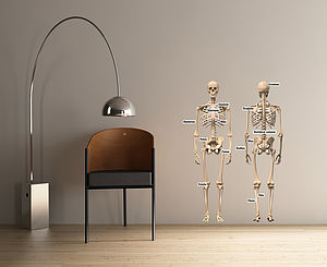 Educational Human Skeleton Wall Stickers