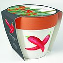 GROW YOUR OWN CHILLI PLANTER KIT