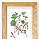 Framed Vintage Aspen Tree Print